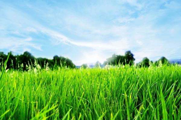 grassy-fields